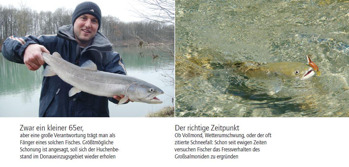 zander-hecht-nein-ein-donaulachs-1
