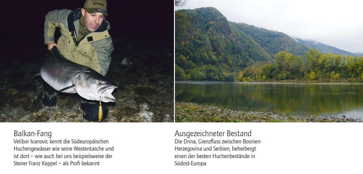 zander-hecht-nein-ein-donaulachs-2