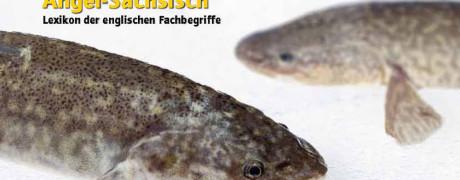Die Winterkönigin (2011/11, Fisch & Wasser)