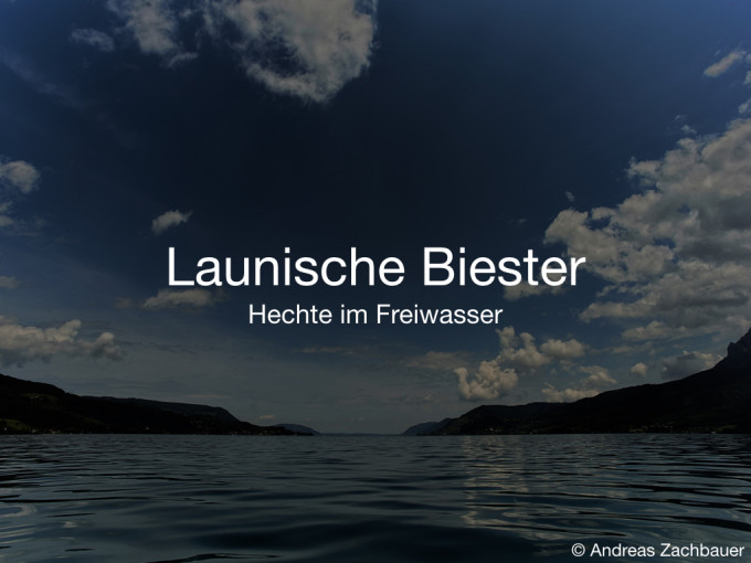 Launische Biester (Fishing Festival 2016)